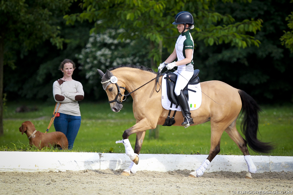 16_hagen_robinson_crownimagine_4340eurodressage