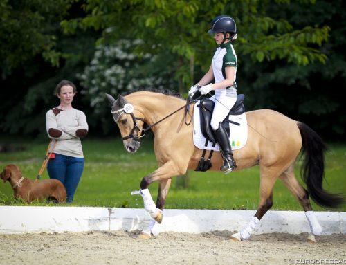 FEI Pony Europameisterschaft in Dänemark